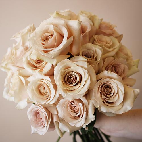 Quicksand Cream Roses