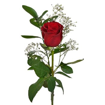 Valentine's Day Single Red or Assorted Rose Bouquet for Fundraising