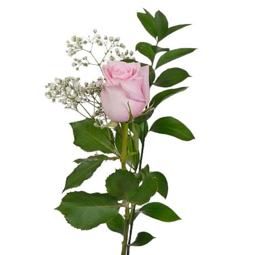 Valentine's Day Single Rose Bouquet for Fundraising