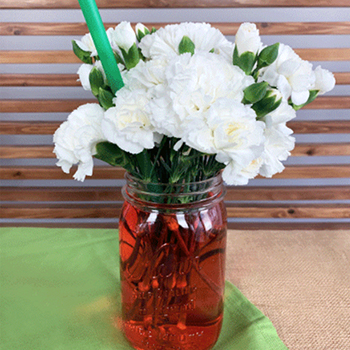 Flower Science Experiment for Kids