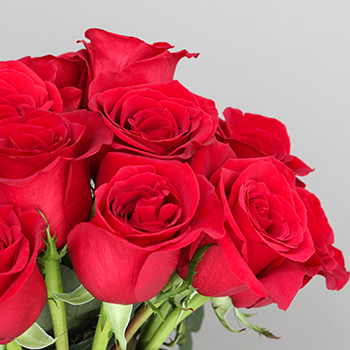 Freedom Red Roses for Valentines Day