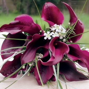 Wedding Calla Lily Pack 200 Mini and 50 Standard