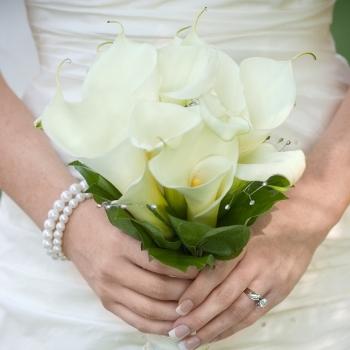 Calla Lily Wedding Package 200 Standard and 80 Mini Callas