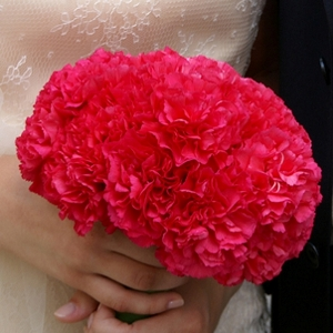 Bright Pink Wholesale Carnations Bunch in a hand