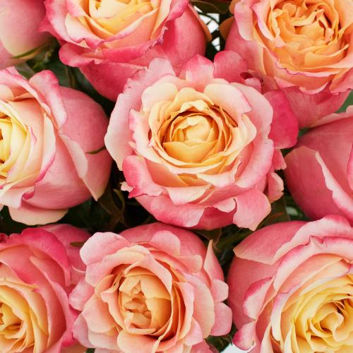3D Sorbet Rose