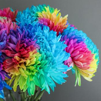 Rainbow Color Palette Tinted Football Mums