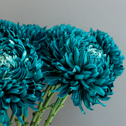 Nautical Turquoise Tinted Football Mums