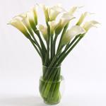 Fresh Flower Gift Calla Lilies