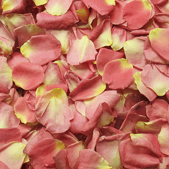 Alluring Peachy Pink Dried Rose Petals