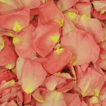 Pink Dried Rose Pedals