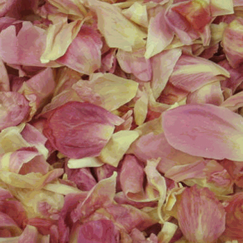 Dazzling Coral Pink Dried Peony Petals