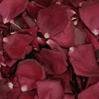 Burgundy Crimson Dried Rose Petals