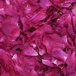 Fuschia Dried Peony Petals