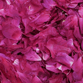 Fuchsia Fun Dried Peony Petals