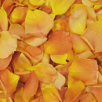 Mango Orange Dried rose Petals
