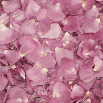 Lucky Lavender Dried Rose Petals