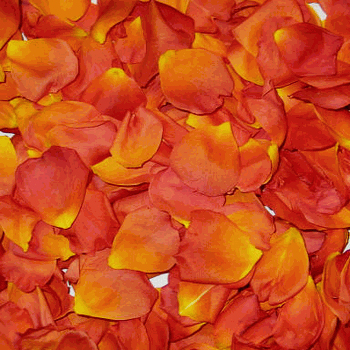 Orange Crush Dried Rose Petals