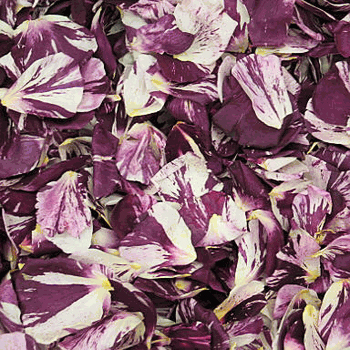 Novelty Purple and White Dried Rose Petals