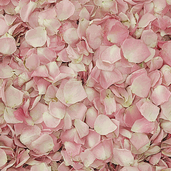 Lydia Petite Pink Dried Rose Petals