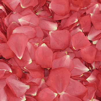 Guava Passion Pink Dried Rose Petals