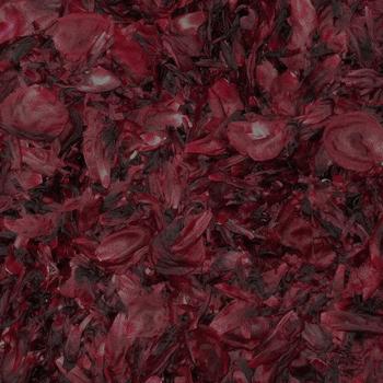 Peony Flower Petals for Weddings