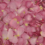 Pink Dried rose Petals for weddings