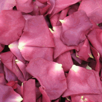 SuperNova Violet Pink Dried Rose Petals