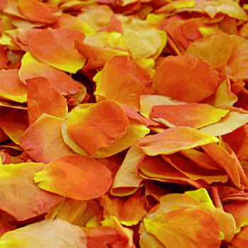 Vavoom Light Orange Dried Rose Petals