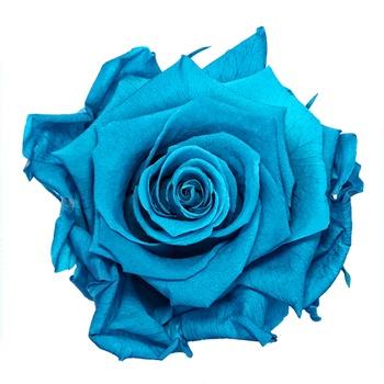 Preserved Aquamarine Rose