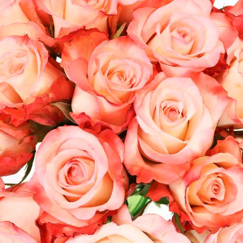 Peach Cobbler Sweetheart Roses