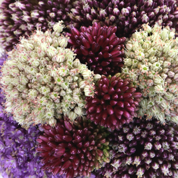 Farm Mix Allium Wedding Flowers