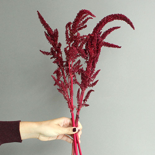 Red Upright Amaranthus Fresh Greens
