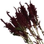 Fresh Greens Red Upright Amaranthus