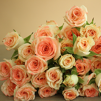 Coral Kiss Spray Rose