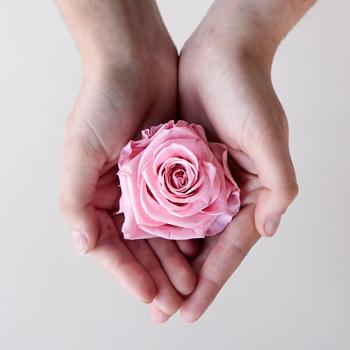 Preserved Antique Pink Rose