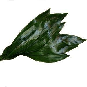 Aspidistra Leaf Greenery