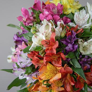 Rainbow Alstroemerias Vday Flowers