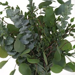 Mixed Eucalyptus Greenery Centerpiece