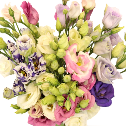 Assorted Mini Lisianthus Wholesale Flower