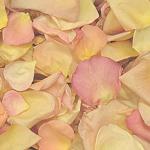 Assorted Freeze Dried Flower Petals