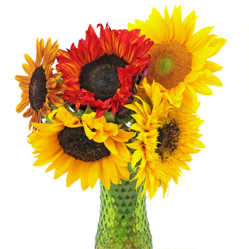 Assorted Sunflowers for Arranging