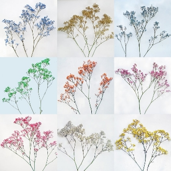 Choose Your Own Airbrushed Baby's Breath