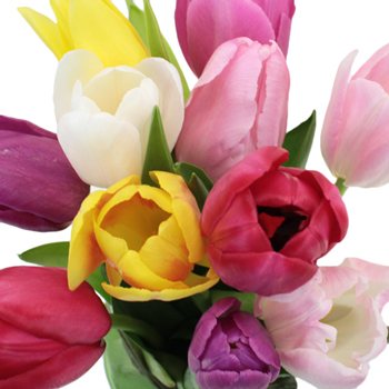 Farm Mix Standard Tulip Flowers