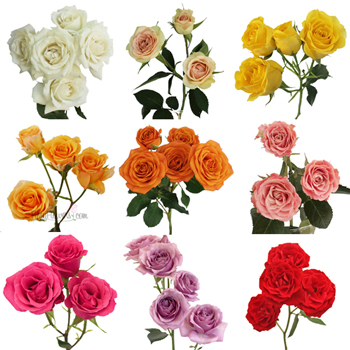 Choose Your Own Spray Bulk Roses