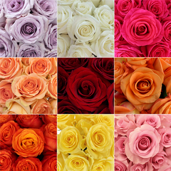 Wholesale Bulk Roses 200 Stems Your Colors