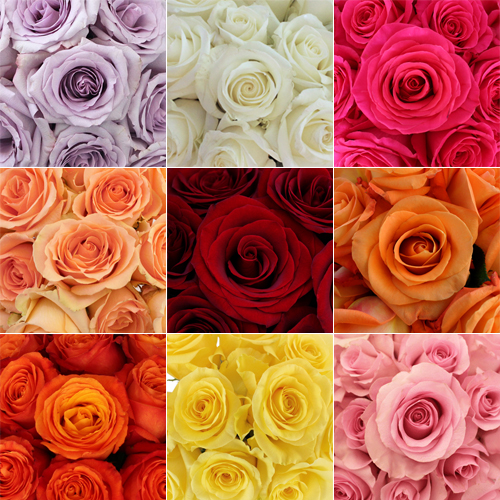 Wholesale Bulk Roses 150 Stems Your Colors