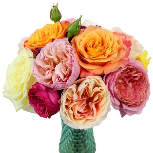 Mother\'s Day Wholesale Garden Roses Assorted Colors