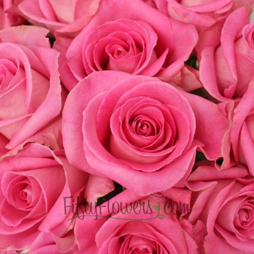 Attache Hot Pink Rose