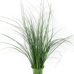 Wholesale greenery bear grass filler flowers bunch
