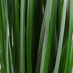 Bulk fresh cut bear grass greenery sold near me